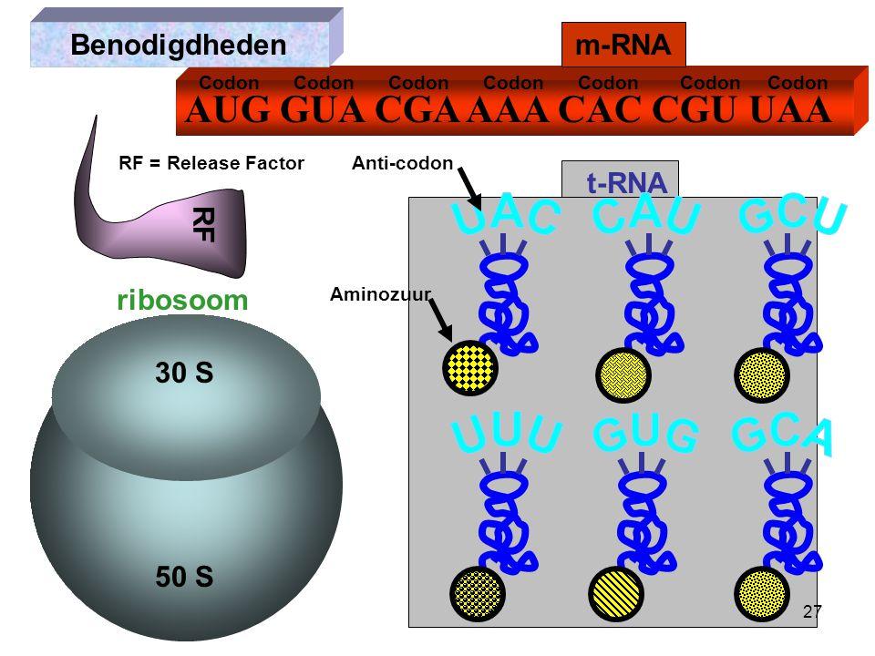 AUG GUA CGA AAA CAC CGU UAA m-RNA ribosoom t-RNA Benodigdheden RF RF = Release Factor 30 S 50 S Anti-codon Codon Aminozuur 27