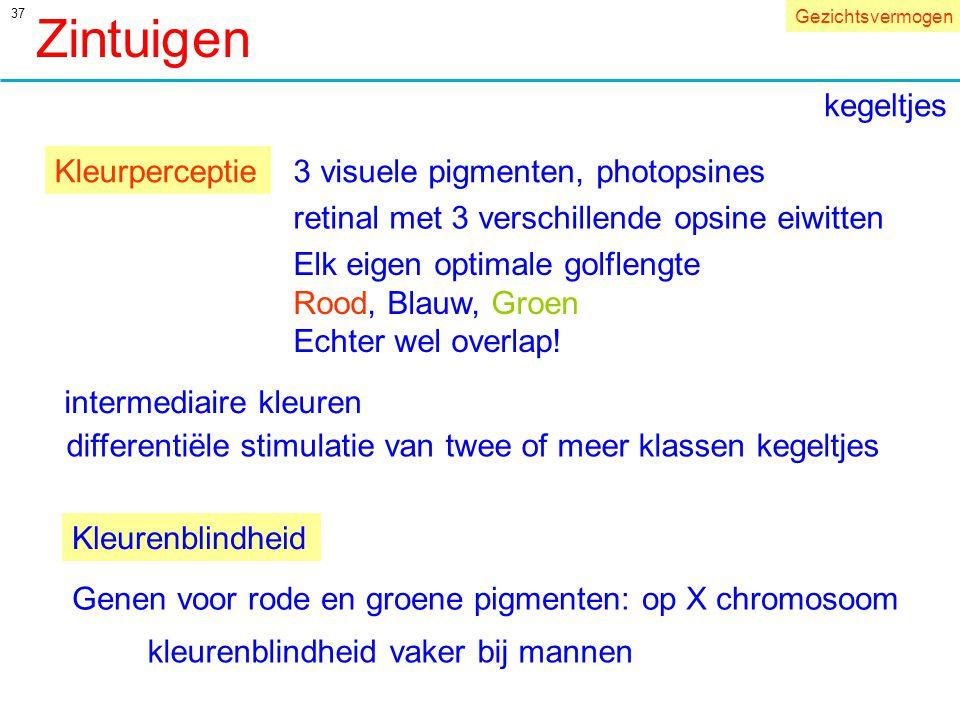 37 Kleurperceptie3 visuele pigmenten, photopsines retinal met 3 verschillende opsine eiwitten Elk eigen optimale golflengte Rood, Blauw, Groen Echter wel overlap.