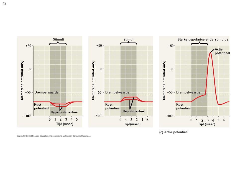 42 Stimuli +50 Stimuli 00 Membrane potential (mV) –50 Drempelwaarde Rust potentiaal Rust potentiaal Hyperpolarisaties –100 0 123 45 Tijd (msec) Depolarisaties 01 234 5 Sterke depolariserende stimulus +50 0 Membrane potential (mV) –50 Drempelwaarde Rust potentiaal –100 Tijd (msec) 01 2 3 4 56 (c) Actie potentiaal Actie potentiaal