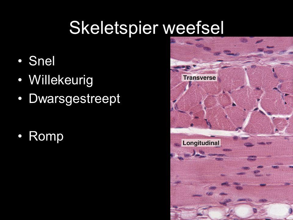 Skeletspier weefsel Snel Willekeurig Dwarsgestreept Romp