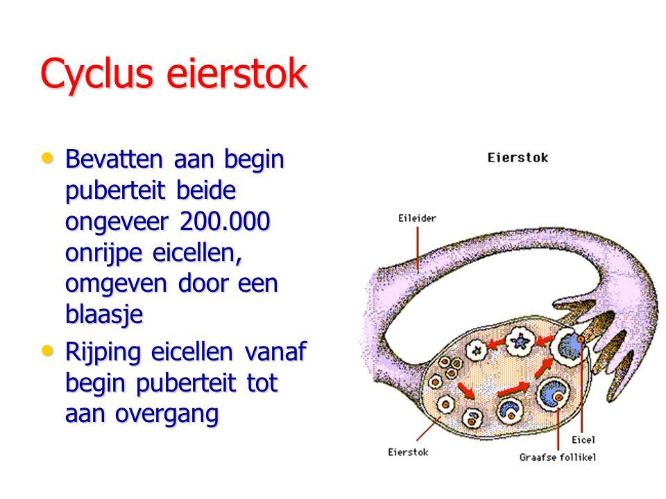 Cyclus eierstok Bevatten aan begin puberteit beide ongeveer 200.000 onrijpe eicellen, omgeven door een blaasje Bevatten aan begin puberteit beide ongeveer 200.000 onrijpe eicellen, omgeven door een blaasje Rijping eicellen vanaf begin puberteit tot aan overgang Rijping eicellen vanaf begin puberteit tot aan overgang