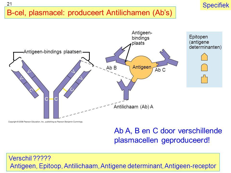 Antigeen- bindings plaats Epitopen (antigene determinanten) Antigeen Antilichaam (Ab) A Ab C Ab B CC C V V V V C Antigeen-bindings plaatsen B-cel, pla