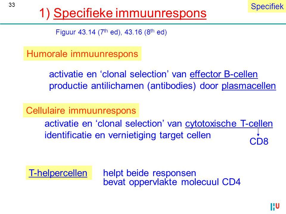Humorale immuunrespons activatie en 'clonal selection' van effector B-cellen productie antilichamen (antibodies) door plasmacellen Cellulaire immuunre
