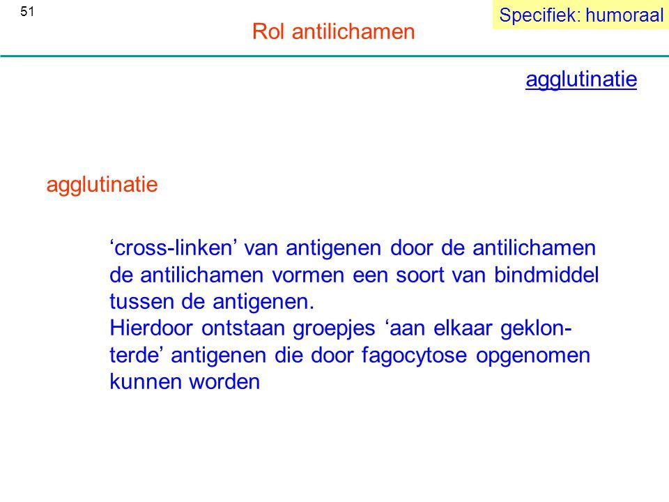 agglutinatie Specifiek: humoraal Rol antilichamen agglutinatie 'cross-linken' van antigenen door de antilichamen de antilichamen vormen een soort van