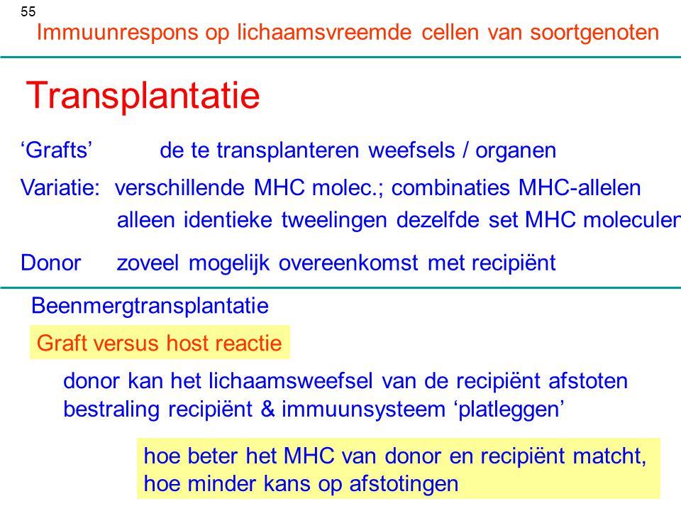 Transplantatie Immuunrespons op lichaamsvreemde cellen van soortgenoten 'Grafts'de te transplanteren weefsels / organen Variatie: verschillende MHC mo