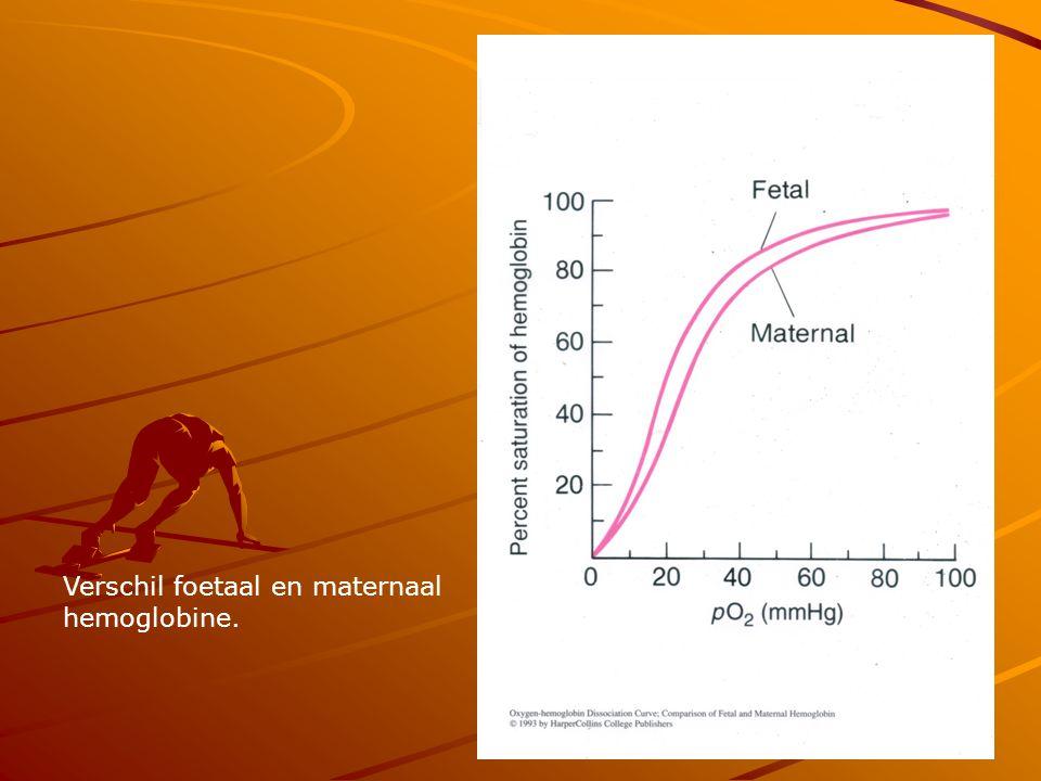 Transport van CO 2 7 % vrij opgelost in het bloed 23% gebonden aan het eiwit van Hb.