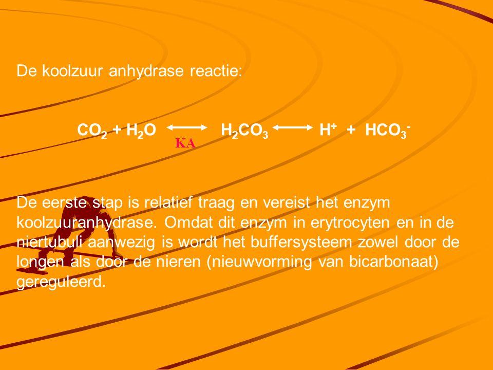 De koolzuur anhydrase reactie: CO 2 + H 2 O H 2 CO 3 H + + HCO 3 - De eerste stap is relatief traag en vereist het enzym koolzuuranhydrase.
