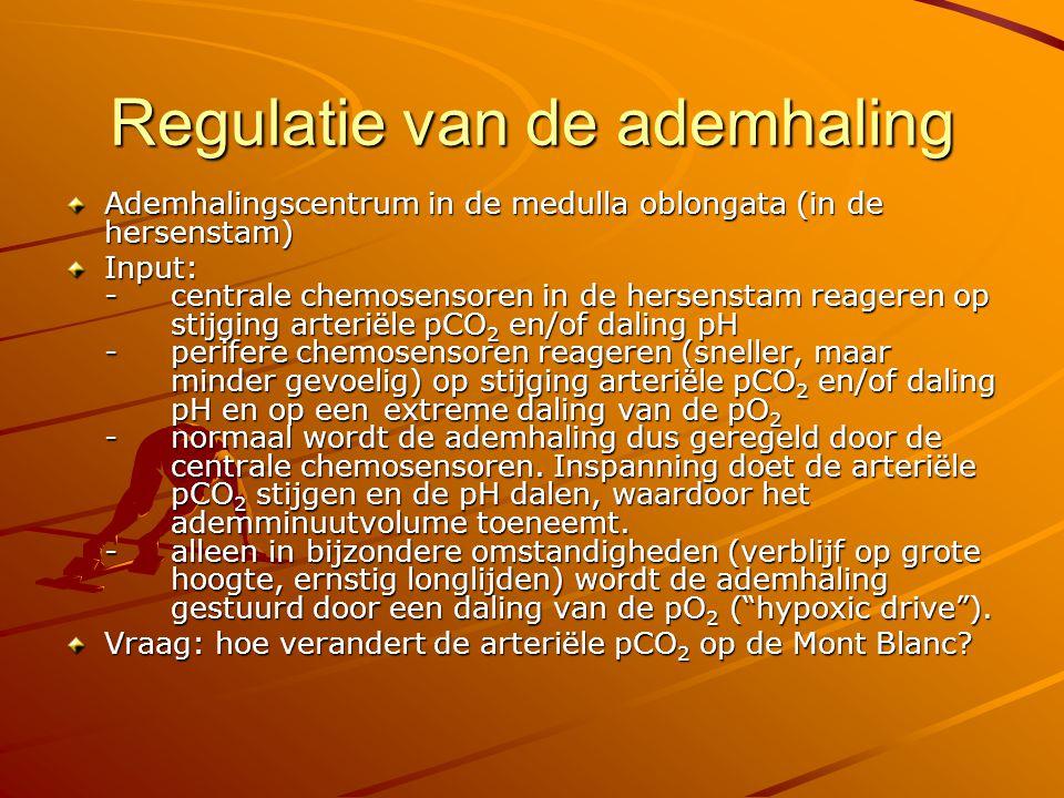 Output ademhalingscentrum Normaal is alleen de inademing actief Vanuit het ademhalingscentrum gaan daarom prikkels naar: -de m.m.