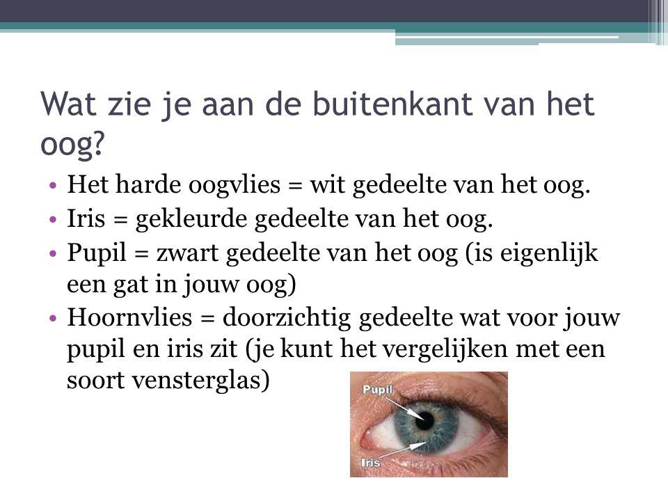 Wat zie je aan de buitenkant van het oog? Het harde oogvlies = wit gedeelte van het oog. Iris = gekleurde gedeelte van het oog. Pupil = zwart gedeelte