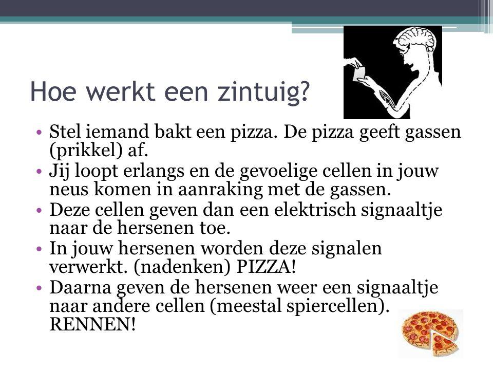 Hoe werkt een zintuig? Stel iemand bakt een pizza. De pizza geeft gassen (prikkel) af. Jij loopt erlangs en de gevoelige cellen in jouw neus komen in