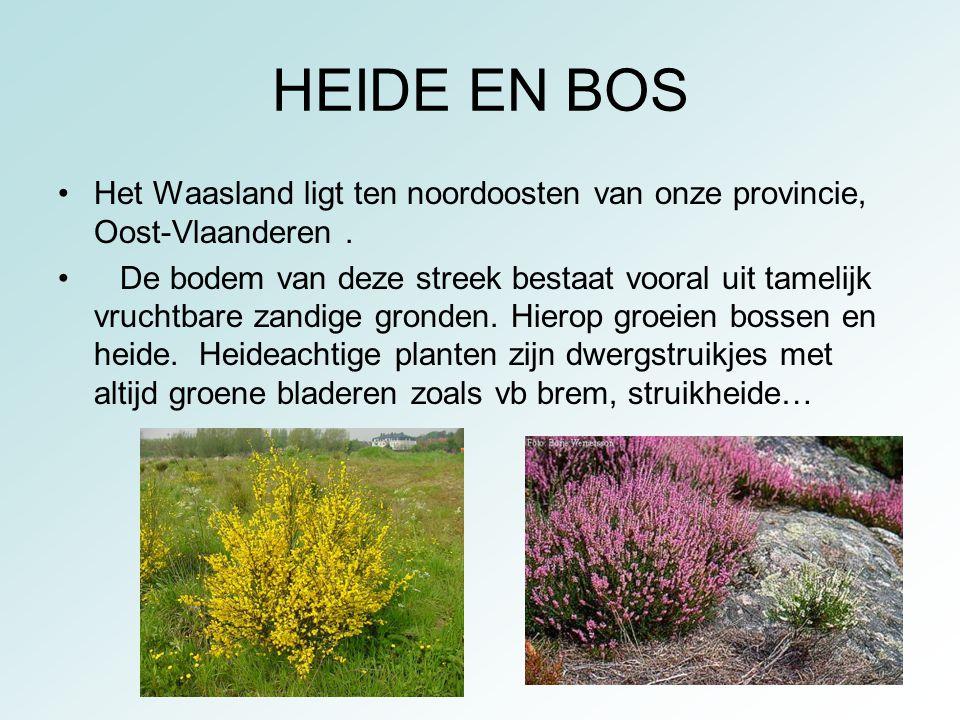 HEIDE EN BOS Het Waasland ligt ten noordoosten van onze provincie, Oost-Vlaanderen. De bodem van deze streek bestaat vooral uit tamelijk vruchtbare za