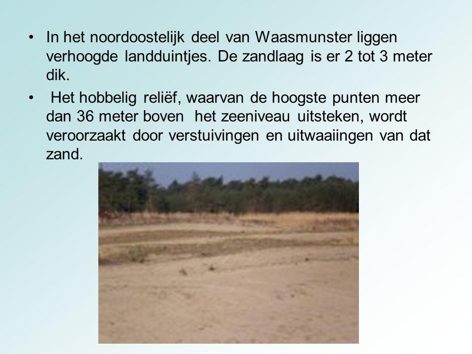 In het noordoostelijk deel van Waasmunster liggen verhoogde landduintjes. De zandlaag is er 2 tot 3 meter dik. Het hobbelig reliëf, waarvan de hoogste