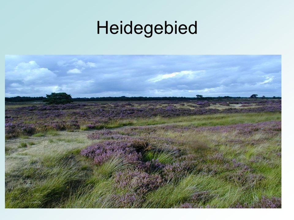 Heidegebied