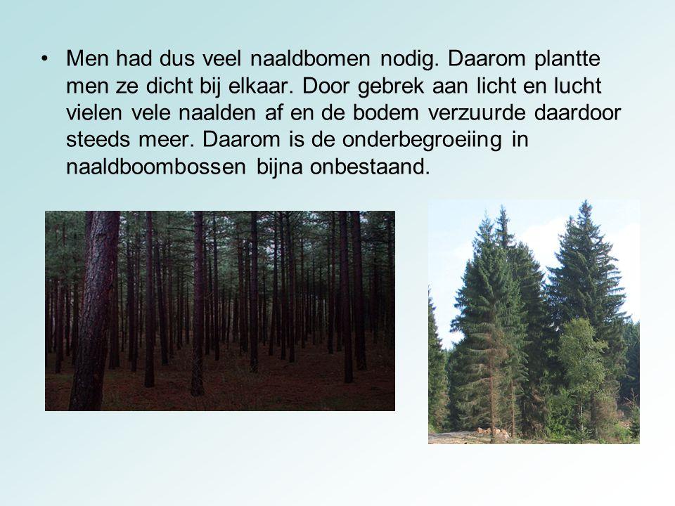 Men had dus veel naaldbomen nodig. Daarom plantte men ze dicht bij elkaar. Door gebrek aan licht en lucht vielen vele naalden af en de bodem verzuurde