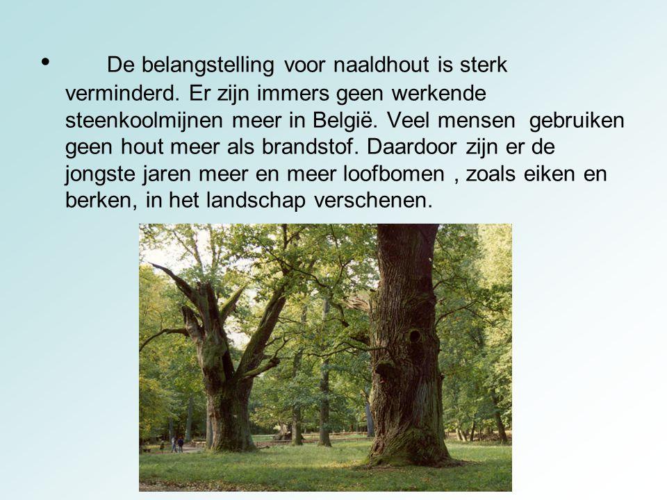 De belangstelling voor naaldhout is sterk verminderd. Er zijn immers geen werkende steenkoolmijnen meer in België. Veel mensen gebruiken geen hout mee