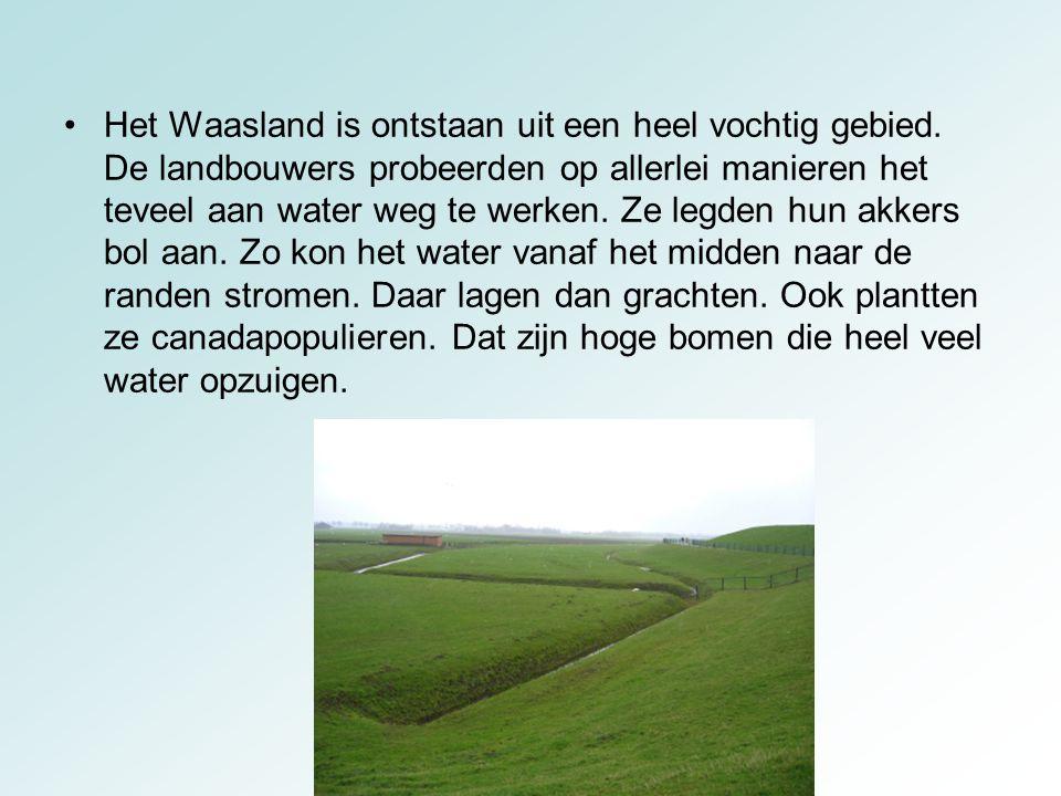 Het Waasland is ontstaan uit een heel vochtig gebied. De landbouwers probeerden op allerlei manieren het teveel aan water weg te werken. Ze legden hun