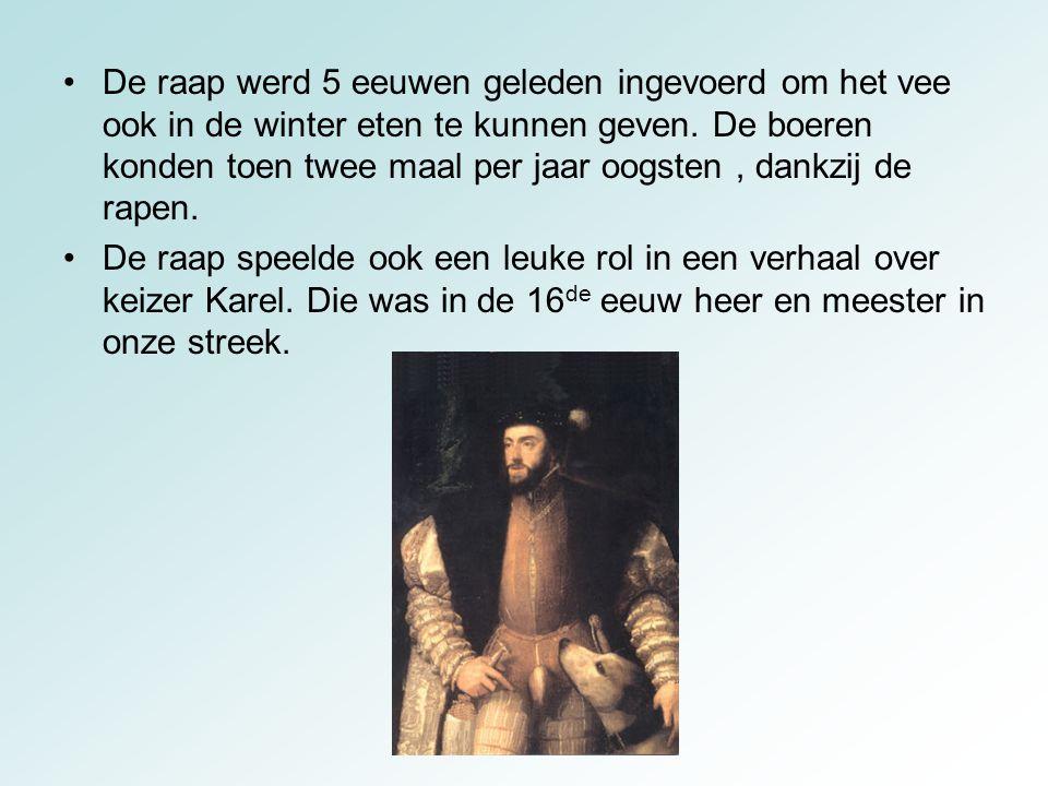 Bij een bezoek aan St.-Niklaas kreeg keizer Karel zo'n schitterende, grote raap cadeau dat hij de boer er een grote beurs geld voor gaf.