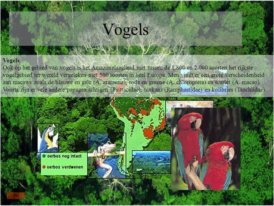 Vogels Vogels Ook op het gebied van vogels is het Amazonelaagland met tussen de 1.800 en 2.000 soorten het rijkste vogelgebied ter wereld vergeleken met 500 soorten in heel Europa.