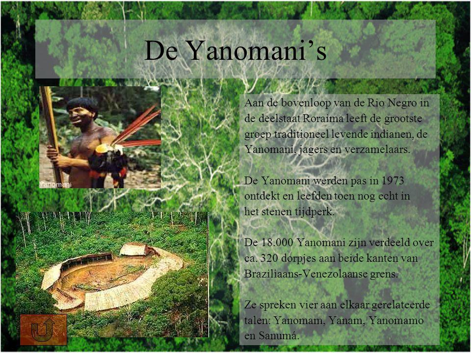 De Yanomani's Aan de bovenloop van de Rio Negro in de deelstaat Roraima leeft de grootste groep traditioneel levende indianen, de Yanomani, jagers en verzamelaars.