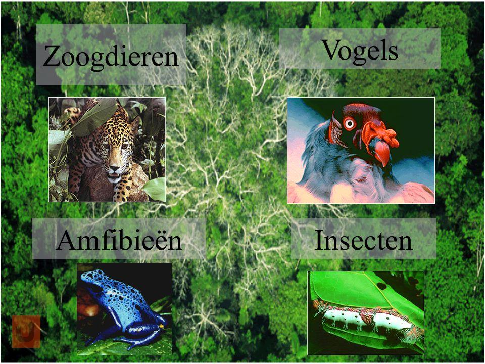 Zoogdieren Vogels AmfibieënInsecten