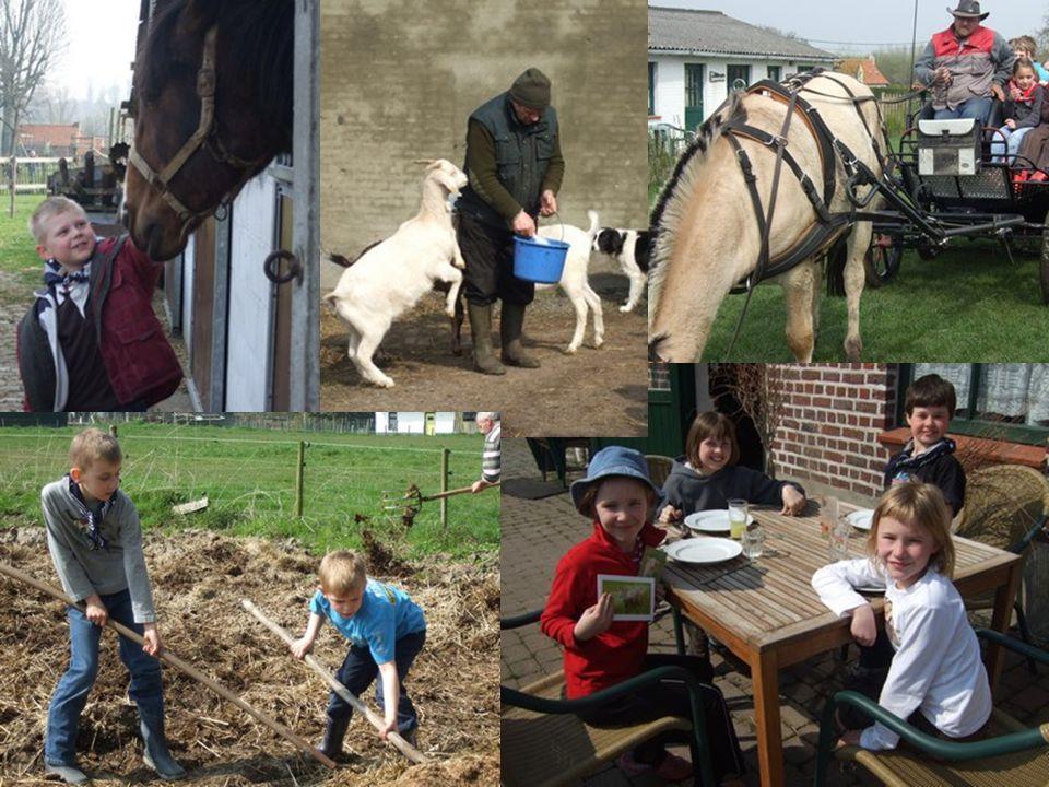 07.30 * opstaan + ochtendgymnastiek 08.00 * ontbijt 08.30 * verzorgen van de dieren 09.30 * bezoek aan imker met huifkar 11.00 * terug naar de boerderij 12.00 * middagmaal 13.00 * boerderijspel 'in de groene wei' 14.00 * bezoek aan de molen 15.30 * vieruurtje 16.00 * terug naar de boerderij 16.30 * verzorgen van de dieren * vrij moment (rusten-lezen-spelen…) 18.00 * avondmaal 19.00 * avondprogramma: knutselmoment 20.15 * wassen + pyjama aan 20.30 * verhaaltje + slaapwel 2.