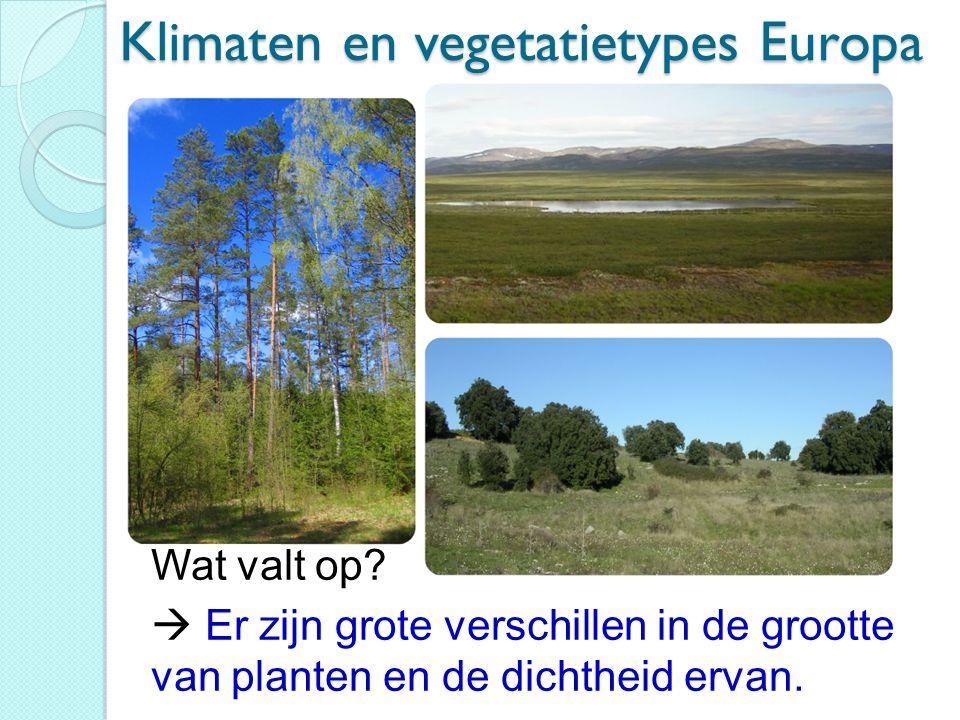Klimaten en vegetatietypes Europa Wat valt op?  Er zijn grote verschillen in de grootte van planten en de dichtheid ervan.