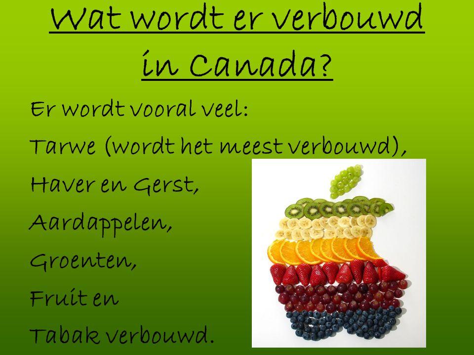 Wat wordt er verbouwd in Canada? Er wordt vooral veel: Tarwe (wordt het meest verbouwd), Haver en Gerst, Aardappelen, Groenten, Fruit en Tabak verbouw