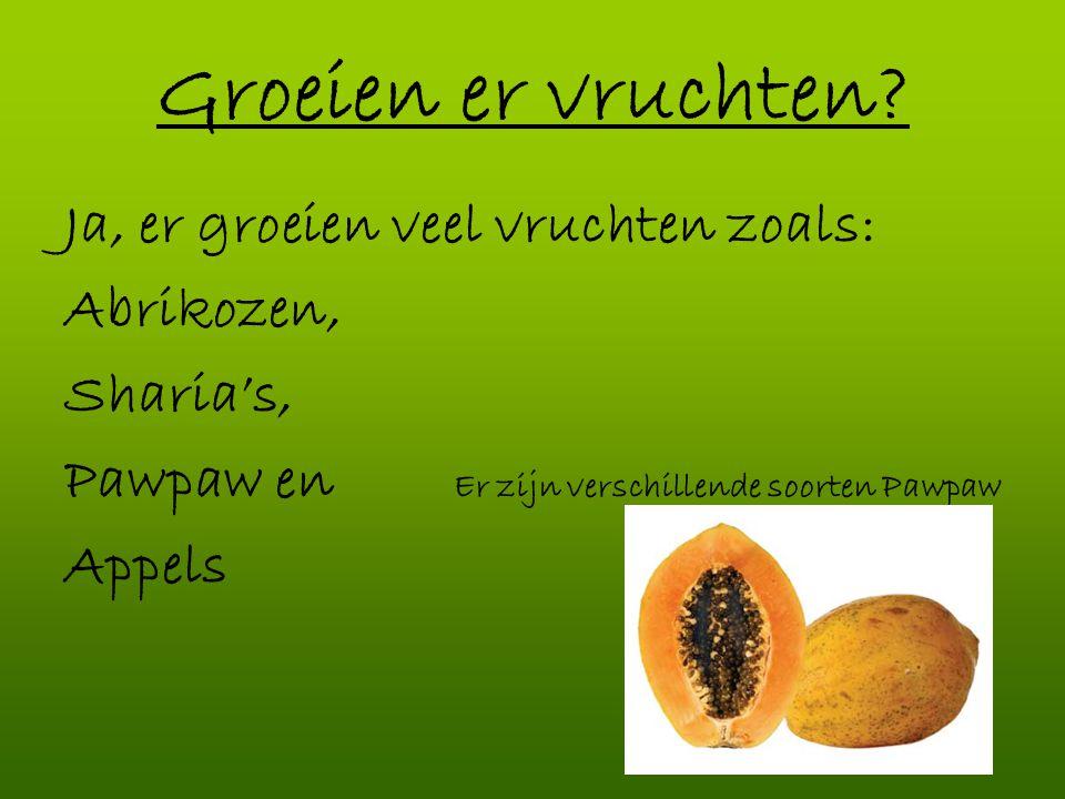 Groeien er vruchten? Ja, er groeien veel vruchten zoals: Abrikozen, Sharia's, Pawpaw en Er zijn verschillende soorten Pawpaw Appels