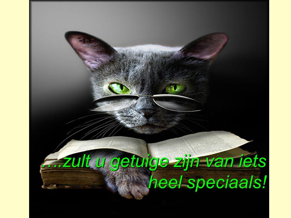 ….zult u getuige zijn van iets heel speciaals!