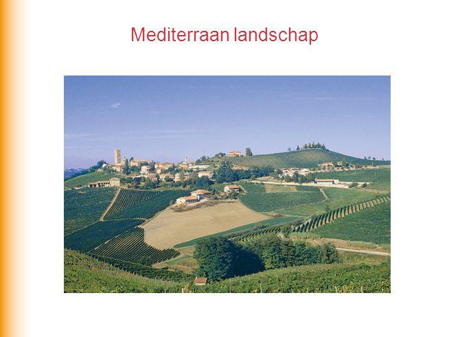 Mediterraan landschap