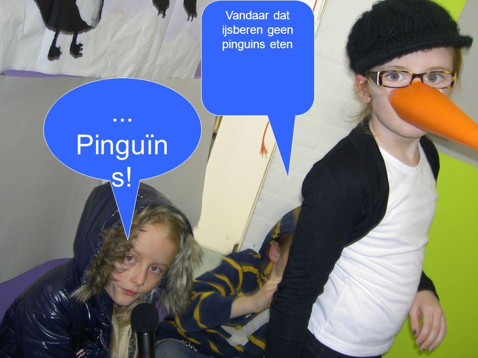 ... Pinguïn s! Vandaar dat ijsberen geen pinguins eten