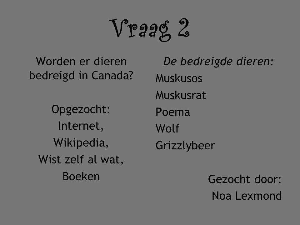 Vraag 2 Worden er dieren bedreigd in Canada? Opgezocht: Internet, Wikipedia, Wist zelf al wat, Boeken De bedreigde dieren: Muskusos Muskusrat Poema Wo