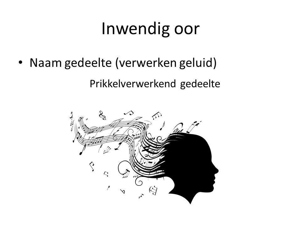 Inwendig oor Naam gedeelte (verwerken geluid) Prikkelverwerkend gedeelte