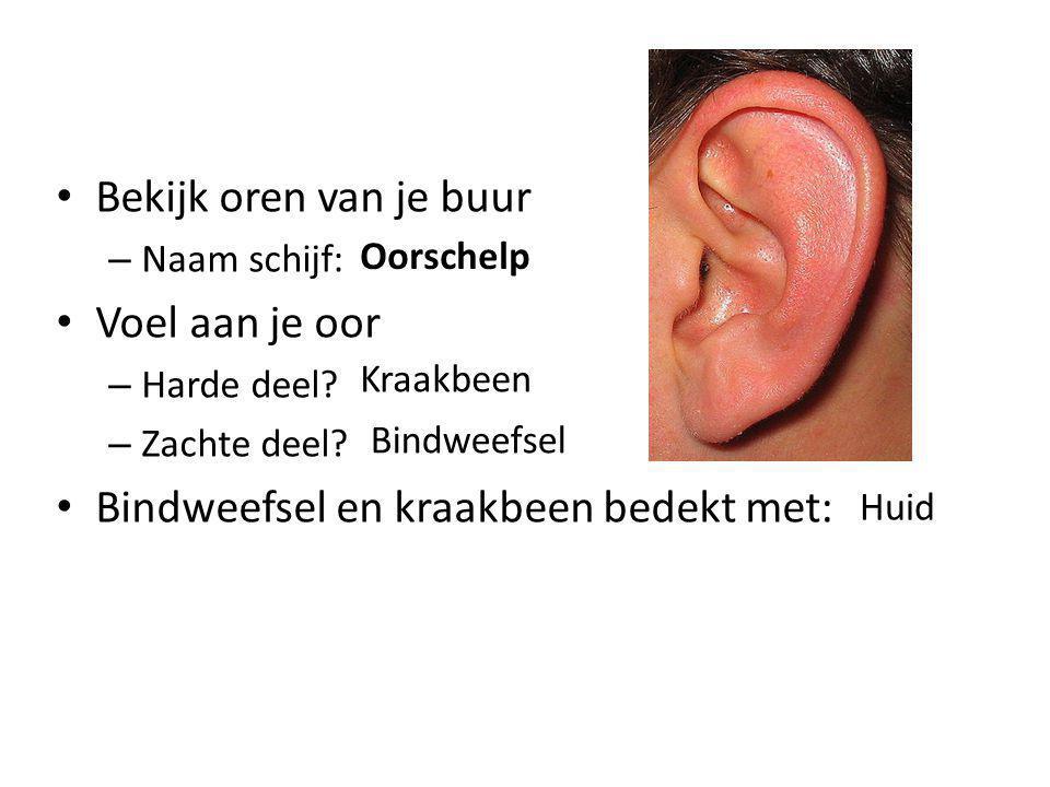 Bekijk oren van je buur – Naam schijf: Voel aan je oor – Harde deel? – Zachte deel? Bindweefsel en kraakbeen bedekt met: Oorschelp Kraakbeen Bindweefs