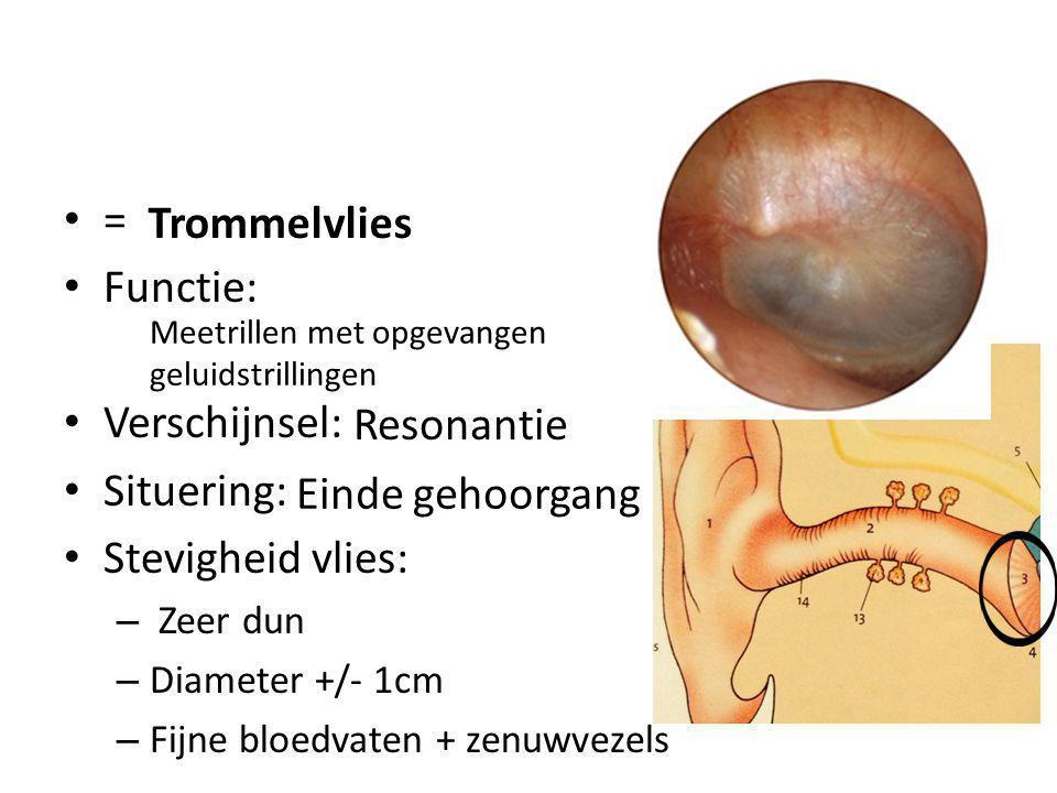 = Functie: Verschijnsel: Situering: Stevigheid vlies: – Zeer dun – Diameter +/- 1cm – Fijne bloedvaten + zenuwvezels Trommelvlies Meetrillen met opgev