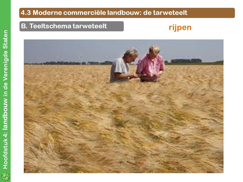4.3 Moderne commerciële landbouw: de tarweteelt B. Teeltschema tarweteelt Hoofdstuk 4: landbouw in de Verenigde Staten rijpen