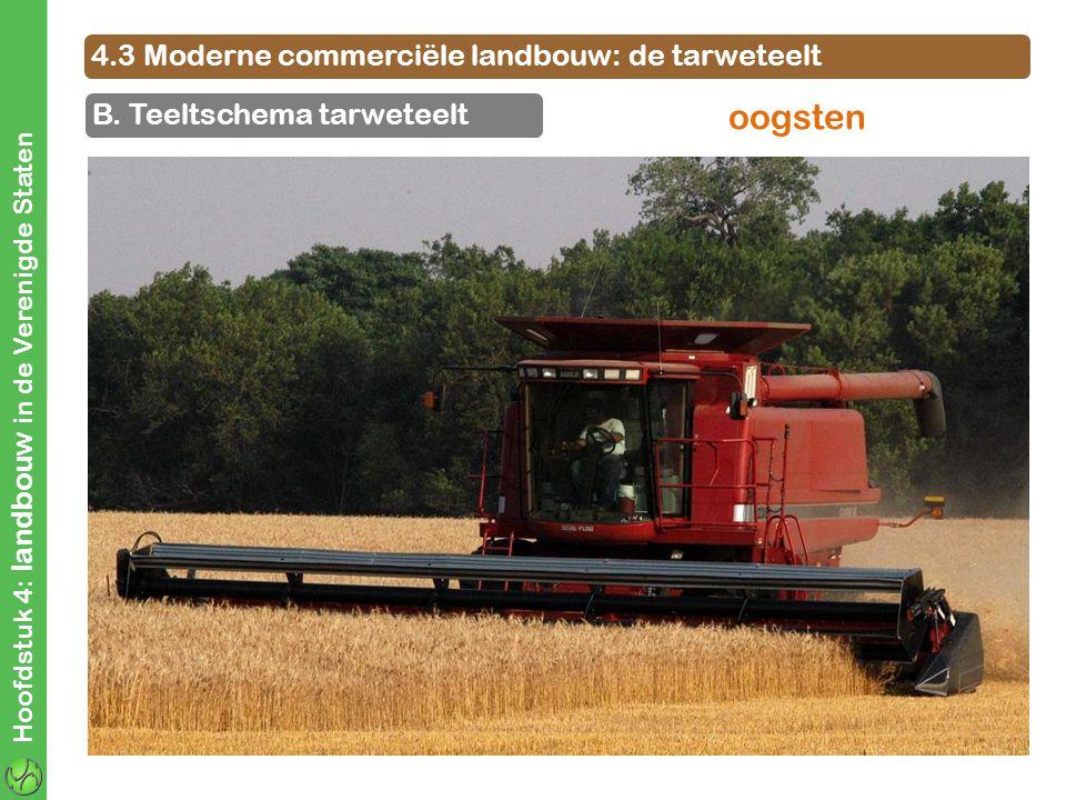 4.3 Moderne commerciële landbouw: de tarweteelt B. Teeltschema tarweteelt Hoofdstuk 4: landbouw in de Verenigde Staten oogsten