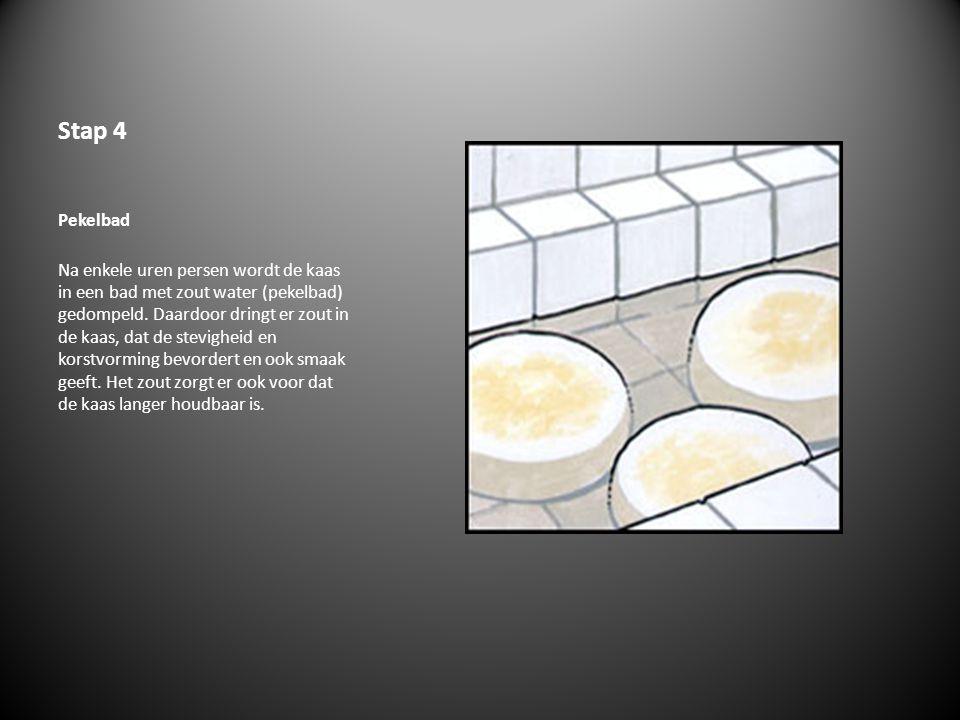 Stap 4 Pekelbad Na enkele uren persen wordt de kaas in een bad met zout water (pekelbad) gedompeld. Daardoor dringt er zout in de kaas, dat de stevigh