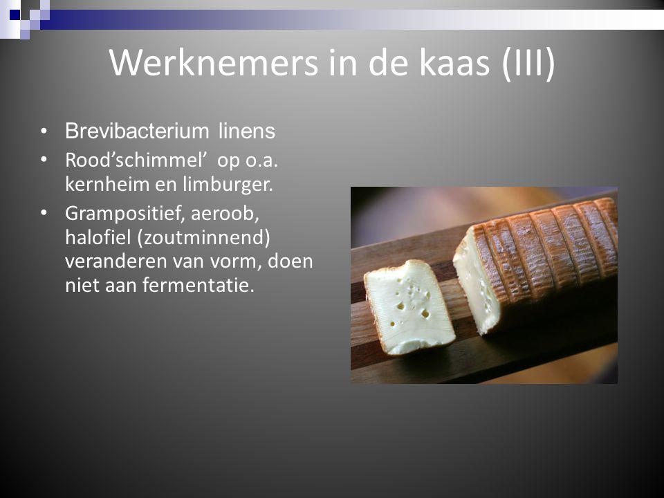 Werknemers in de kaas (III) Brevibacterium linens Rood'schimmel' op o.a. kernheim en limburger. Grampositief, aeroob, halofiel (zoutminnend) verandere