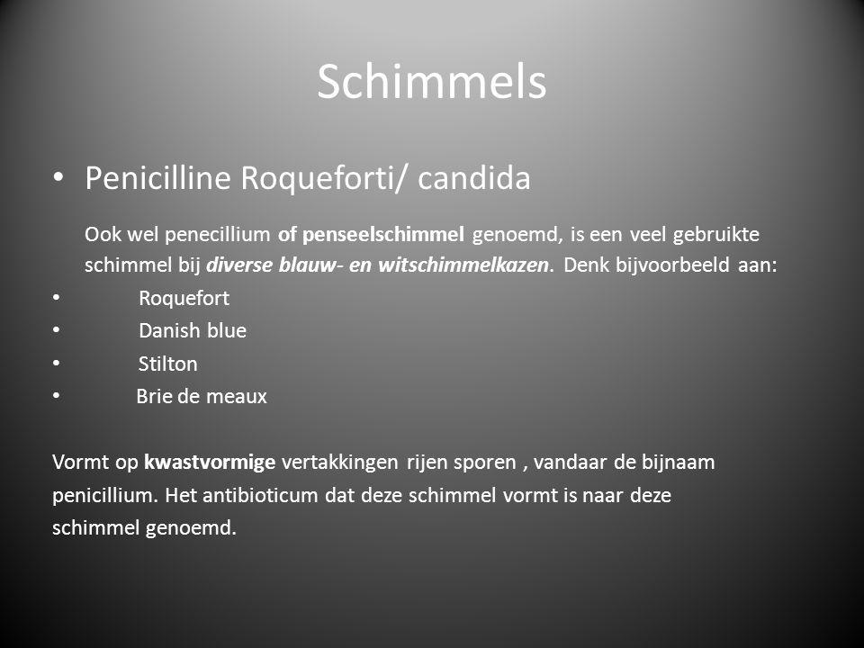Schimmels Penicilline Roqueforti/ candida Ook wel penecillium of penseelschimmel genoemd, is een veel gebruikte schimmel bij diverse blauw- en witschi