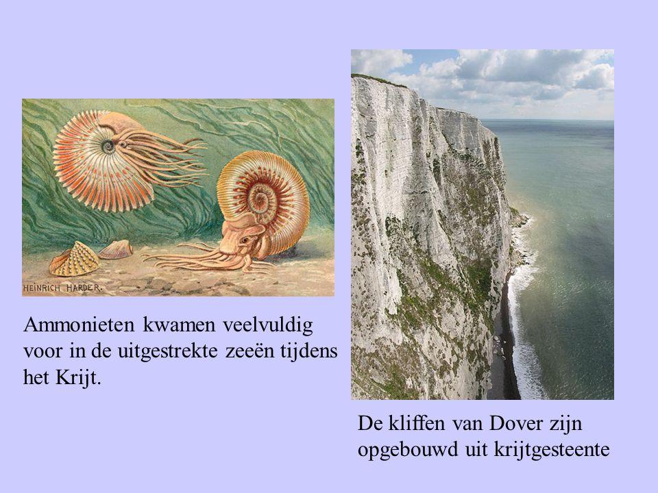 De kliffen van Dover zijn opgebouwd uit krijtgesteente Ammonieten kwamen veelvuldig voor in de uitgestrekte zeeën tijdens het Krijt.