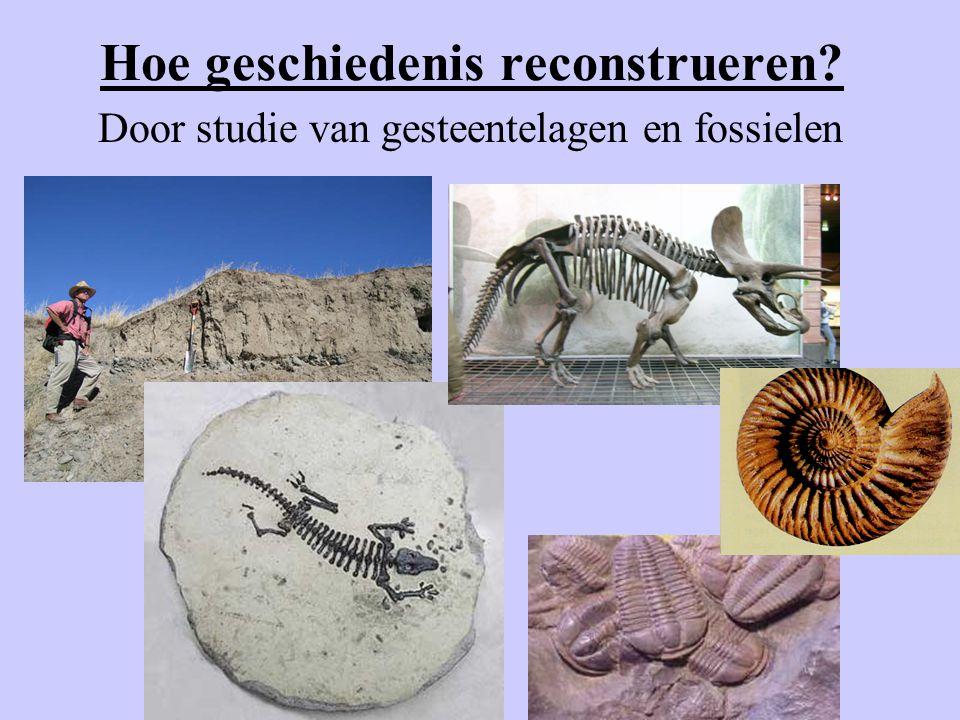 Hoe geschiedenis reconstrueren? Door studie van gesteentelagen en fossielen