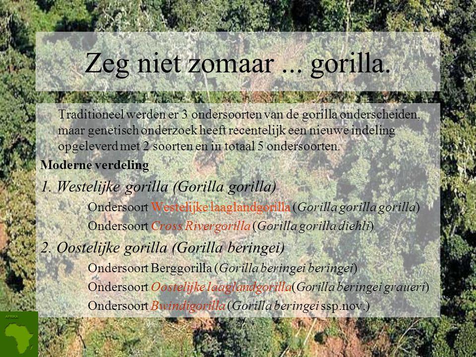 De gorilla De gorilla's (Gorilla) vormen een geslacht van Afrikaanse mensapen met twee soorten. Het zijn de grootste nog levende apen.