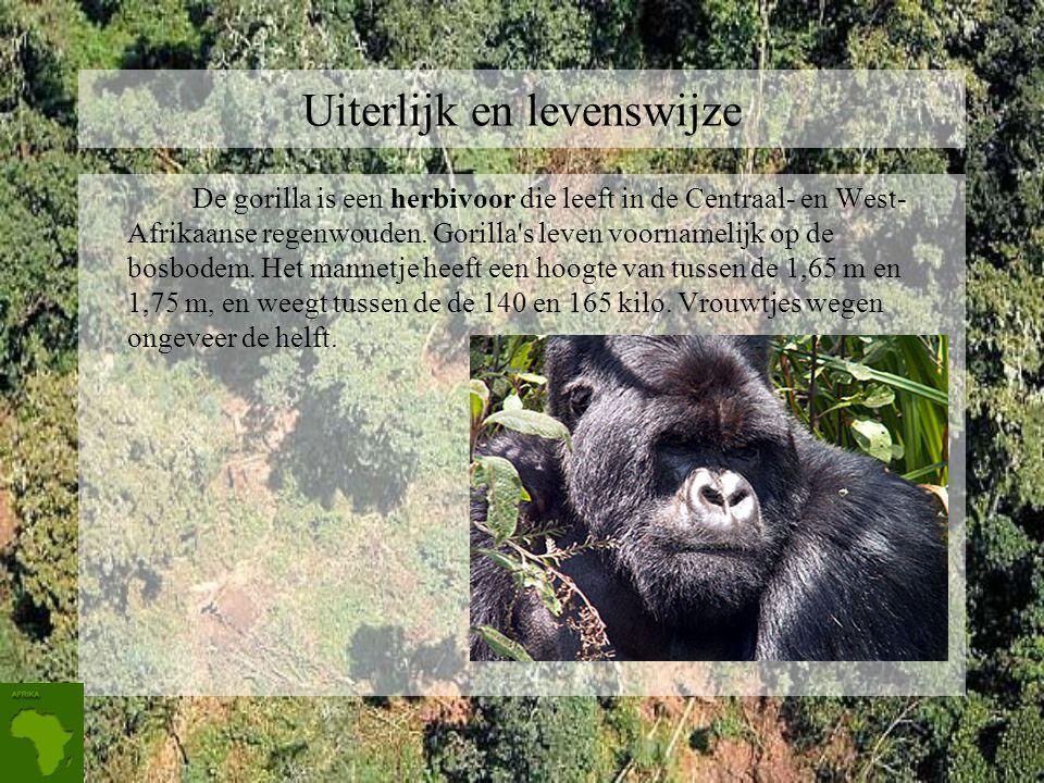 Hun leefgebied en bedreigingen. De berggorilla ' s leven allemaal in het grensgebied tussen Rwanda, de Democratische Republiek Congo (DRC) en Uganda.