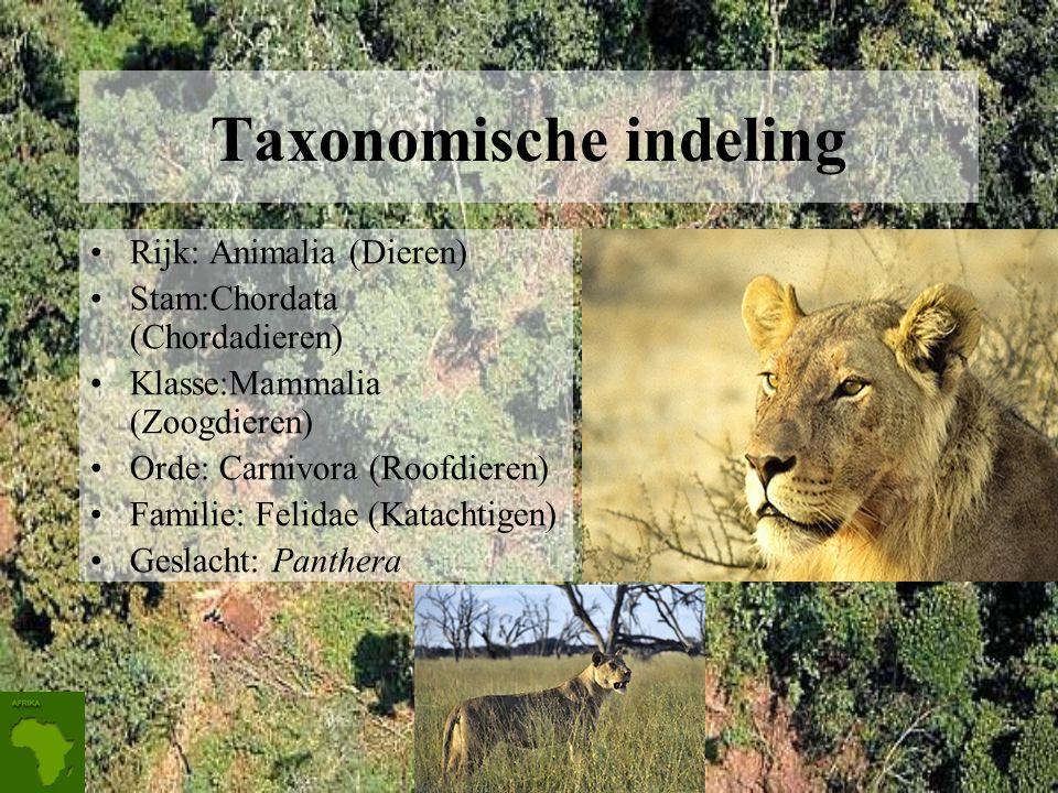 Taxonomische indeling Rijk: Animalia (Dieren) Stam:Chordata (Chordadieren) Klasse:Mammalia (Zoogdieren) Orde: Carnivora (Roofdieren) Familie: Felidae (Katachtigen) Geslacht: Panthera
