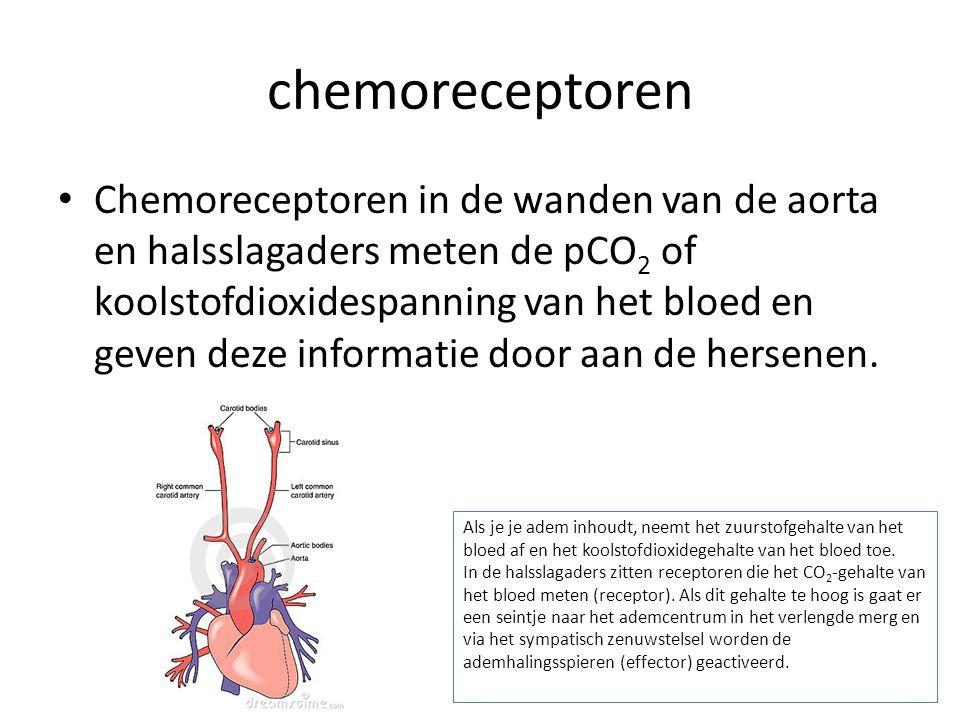 chemoreceptoren Chemoreceptoren in de wanden van de aorta en halsslagaders meten de pCO 2 of koolstofdioxidespanning van het bloed en geven deze infor