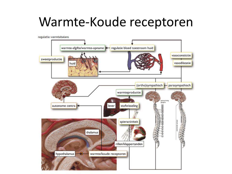 Warmte-Koude receptoren