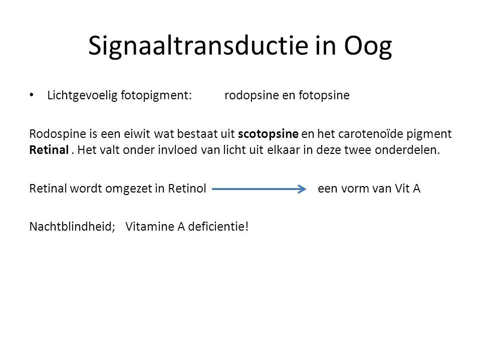 Signaaltransductie in Oog Lichtgevoelig fotopigment: rodopsine en fotopsine Rodospine is een eiwit wat bestaat uit scotopsine en het carotenoïde pigme