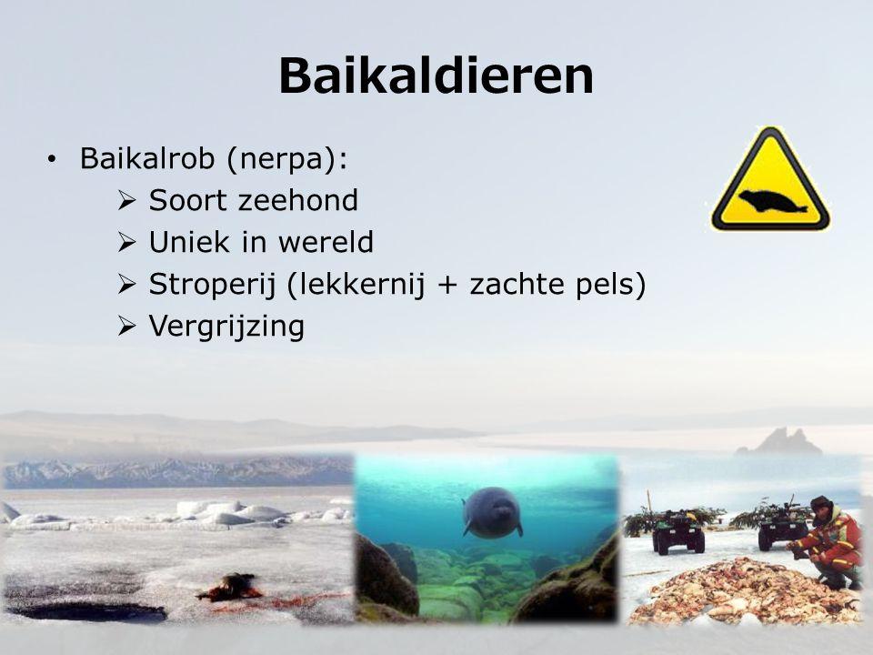 Baikalrob (nerpa):  Soort zeehond  Uniek in wereld  Stroperij (lekkernij + zachte pels)  Vergrijzing Baikaldieren