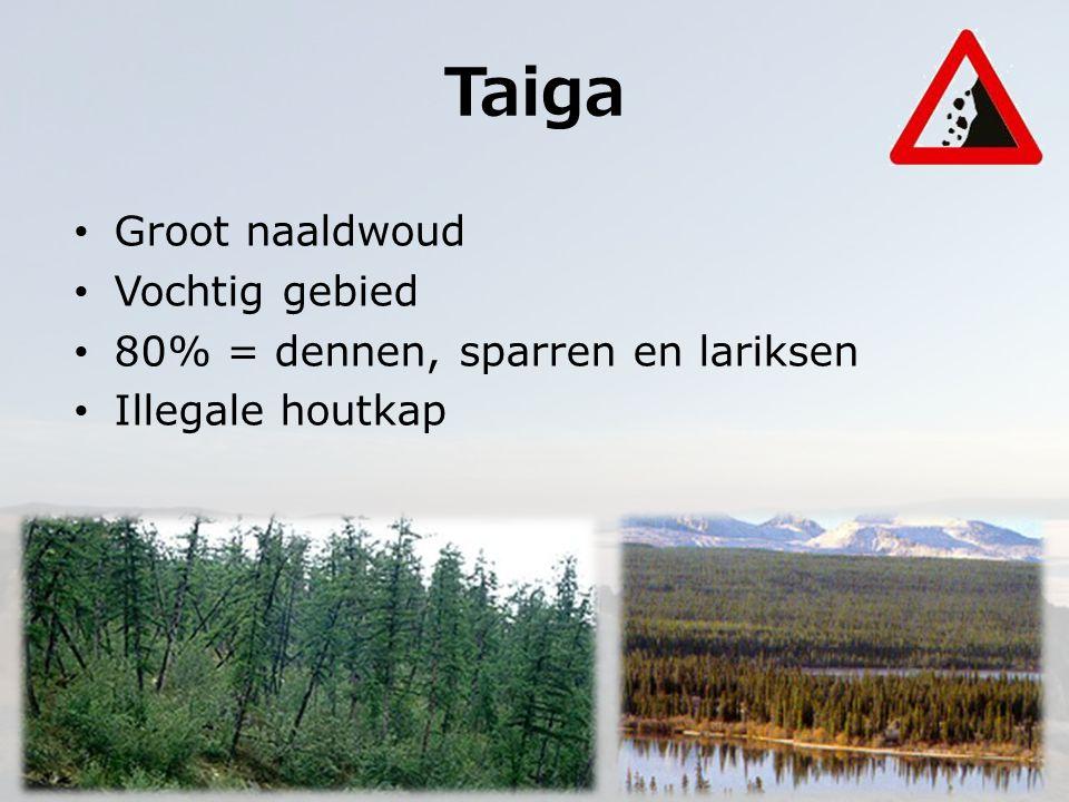 Taiga Groot naaldwoud Vochtig gebied 80% = dennen, sparren en lariksen Illegale houtkap